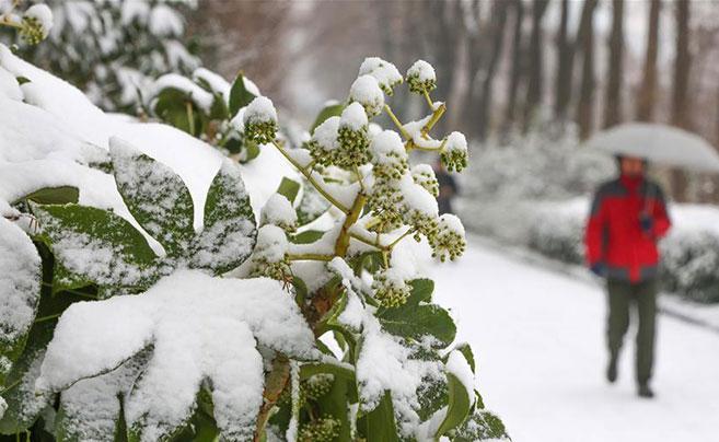 全国多地迎来降雪天气