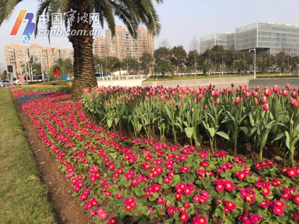 东部新城府西、府北河绿地内花卉布置2.jpg