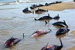"""柏油路融化上万只动物死亡 南半球多国经历""""史上最热"""""""