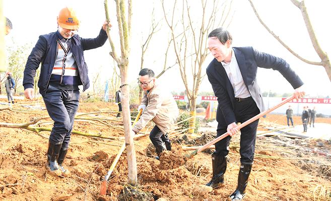 区领导参加义务植树活动