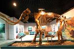 猛犸象复活有望?科学家确认2.8万年前细胞核活动情况