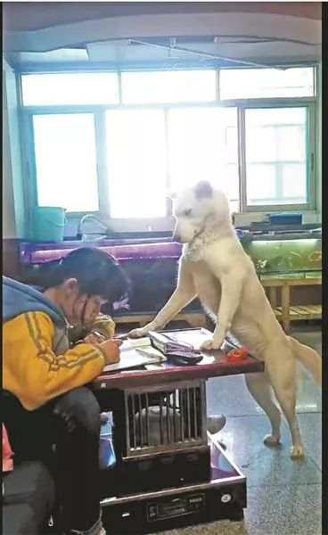 父亲养狗监督女儿做作业 网友:狗为这个家操碎了心