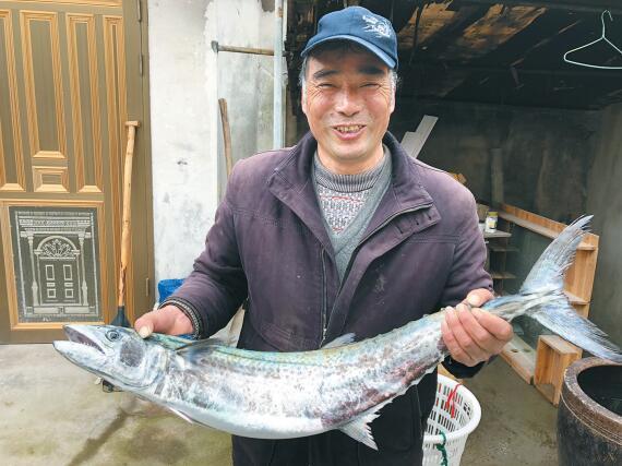 赞!咸祥渔民捕到6公斤重象山港马鲛鱼