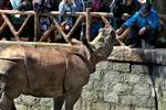 上海:?#20405;?#29420;角犀牛正式与游?#22270;?#38754;