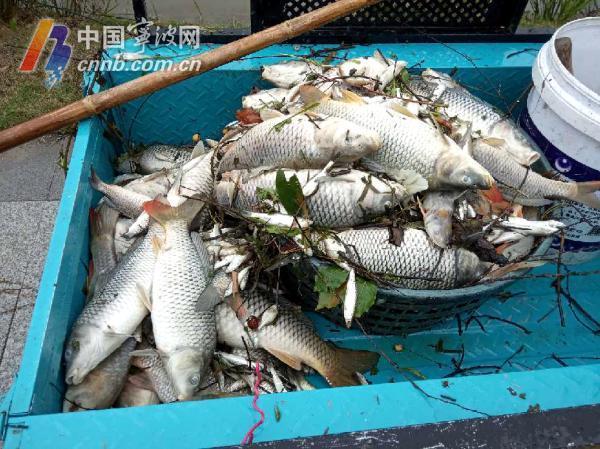 死鱼5.jpg