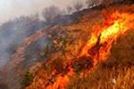 济南突发山火:上坟烧纸引起 肇事者已被警方控制