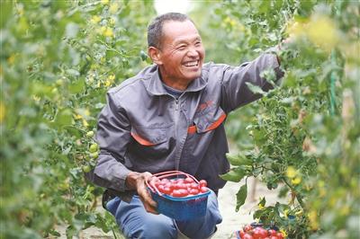 地产小番茄上市