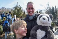 哥本哈根动物园熊猫馆向公众开放