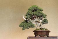 世界园林巡礼――日本大宫盆栽美术馆