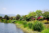 云南石屏:异龙湖湿地美如画卷