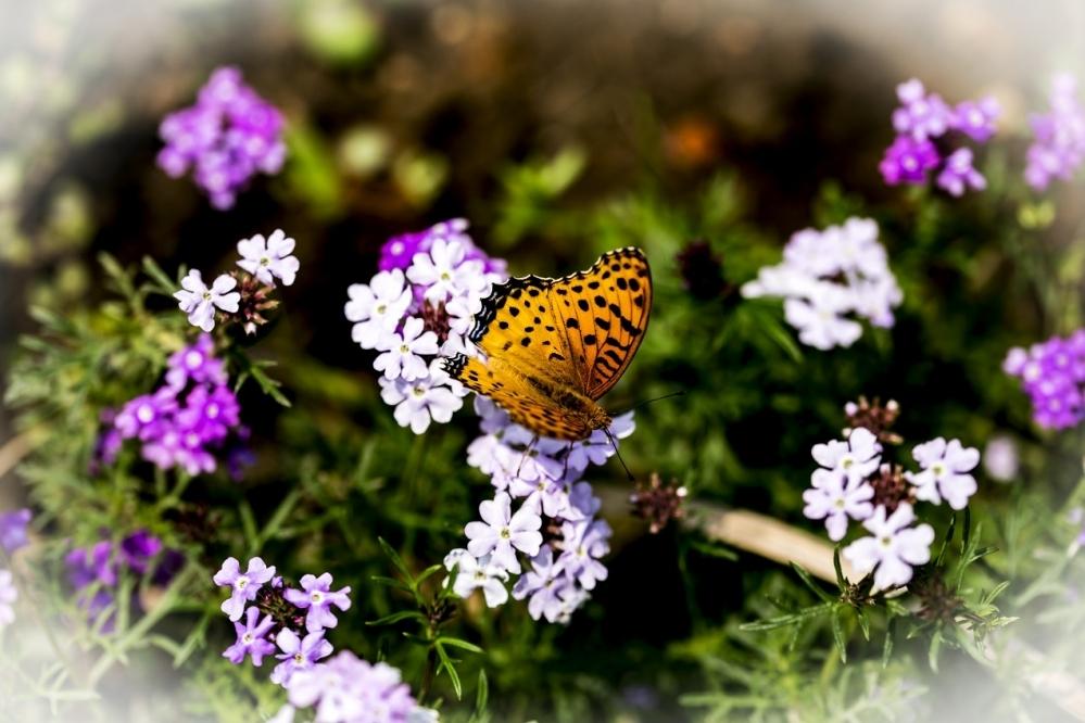 春光烂漫 百花盛开