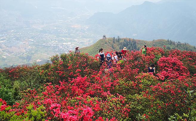 贵州丹寨£º岭上开遍映山红