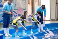 第二届中华白海豚保护宣传日在珠海长隆启动