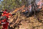 男子抽烟引发森林火灾 致林木损失超3000万获刑5年