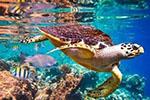 全球八分之一物种濒临灭绝 灭绝速度大大高于1000万年前