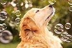 2023年我国宠物市场规模或超3000亿 各种法规须跟上