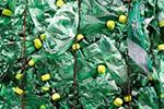 著名饮料公司宣布将在日本使用100%可回收塑料瓶