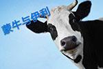 伊利公开声明:中粮蒙牛联合美国企业破坏冬奥大局