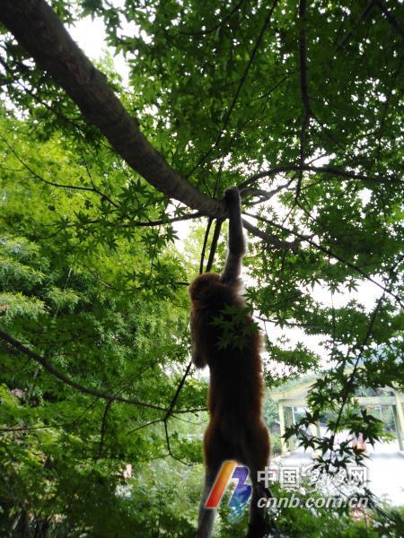 猴子1.jpg