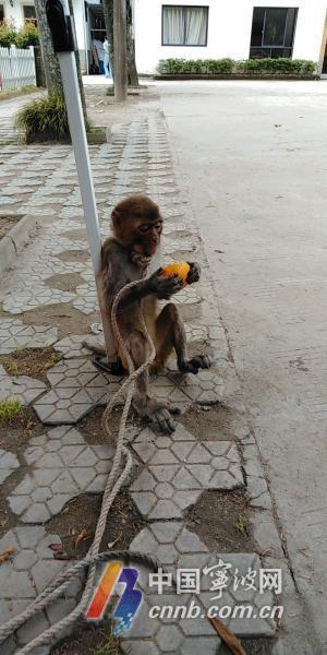 猴子3.jpg