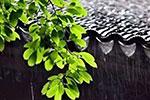 入梅以来浙江降水量多于往年同期 为什么今年雨水特别多