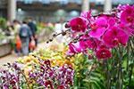 昆明国际花卉展即将举行