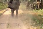 印度野生动物园惊魂:愤怒大象冲向游客汽车