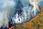 巴西派军队赴亚马孙雨林救火 新增1600多处着火点
