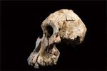考古学家发现380万年前头骨化石 或颠覆人类进化史