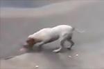 超暖!墨西哥一宠物狗暴雨过后帮助清理街道垃圾