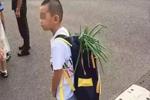 小学生上学背着葱出现在校门口 网友:沉甸甸都是期望和爱