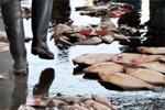 黑帮生意越来越难做 日本山口组成员非法捕鱼谋生