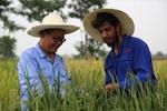 达则兼济天下——记在巴基斯坦教授杂交水稻技术的中国专家