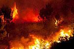 干旱严重 亚马孙雨林大火危及多处古岩画群