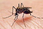 最近有没有被咬得到处是包?那是蚊子越冬前最后的疯狂