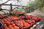 柿子和螃蟹能不能一起吃?杭州有人吃进ICU差点没命