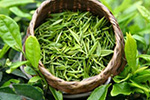 绿茶有种成分可用来精确给药