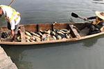 广州旺旺食品涉嫌偷排被查 强碱废水致大量鱼类死亡