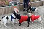 多个城市出台养犬新政 纵犬、虐犬都将面临重罚!