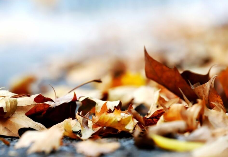 一地金黄见深秋
