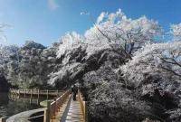 江南华南局地降温超10℃ 南方7省会开启入冬