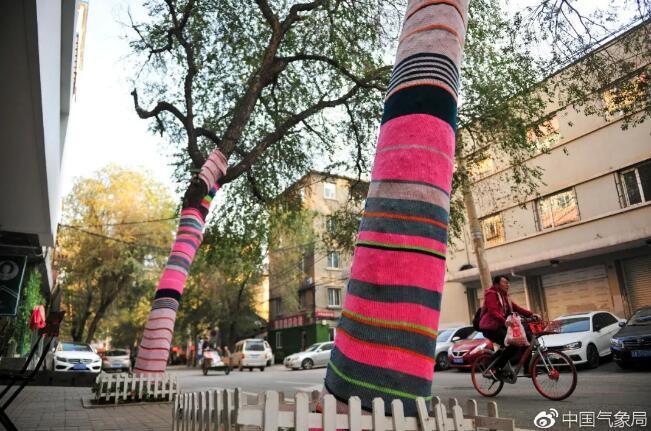 """图为沈阳的树都穿上了""""秋裤""""。图片来源:中新网"""