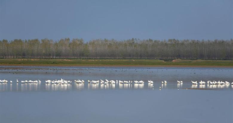洞庭湖畔候鸟翔集