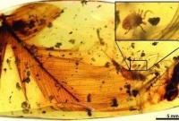 """中美科学家首次在恐龙羽毛化石中发现""""虱子"""""""