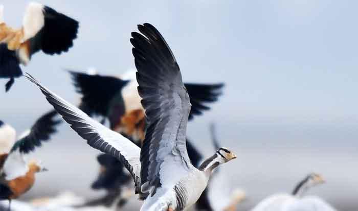 贵州草海迎来大批越冬候鸟