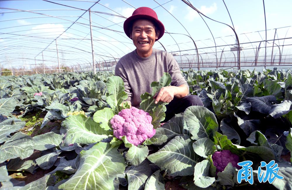 罗永良展示种植的紫花菜。(陈章升 摄).JPG