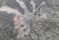 美国纽约州一采石场发现全球最古老森林化石:距今3.8亿年