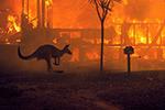 惨不忍睹!澳大利亚5亿动物葬身火海 约2.5万只考拉被烧死
