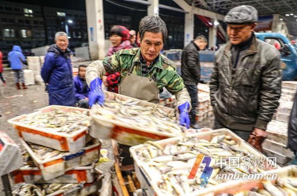 锃锃发亮的长带鱼、红膏爆裂的梭子蟹、肉质饱满的大鲳鱼……昨天(11日)清晨,位于象山县石浦镇的中国水产城交易大厅人头攒动,市场内一派繁忙景象。临近春节,水产城的鱼货交易异常火爆,经销商们忙着接货、分拣、装箱,日均超过2200吨的各类海鲜产品供应市场,极大丰富市民餐桌。