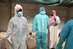 沙特越南暴发禽流感